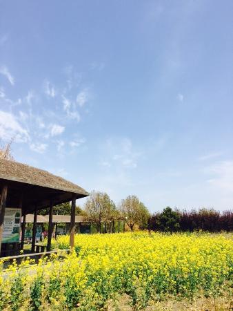 Yancheng, Kina: Scenes are nice. A quiet and clean park to visit! If you are interested in the reed maze, I woul