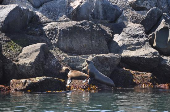 Newport Landing Whale Watching California Sea Lions Chilling On The Rocks Photo By