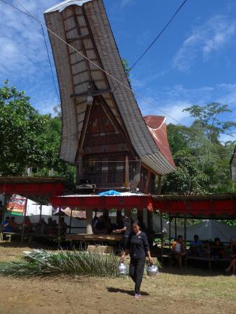 Toraja Land