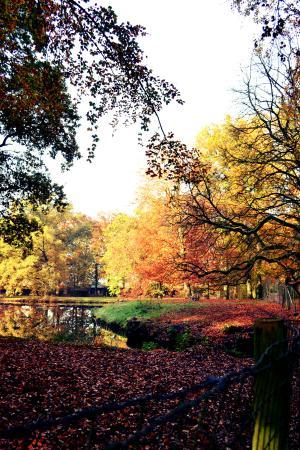 Kasteel de Essenburgh : Beautiful autumn trees in the surroundings