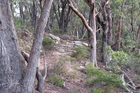 Mount Blackheat Lookout: het pad naar de lookout