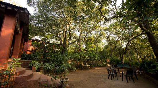 Radha Cottage: premises