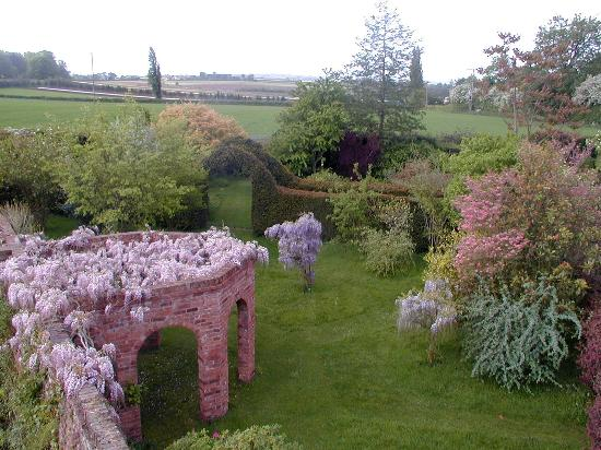 Wisterias picture of stone house cottage gardens kidderminster stone house cottage gardens wisterias workwithnaturefo