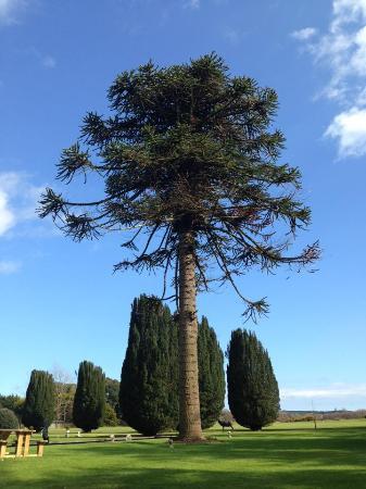 Interesting vegetation at Castlemartyr Hotel
