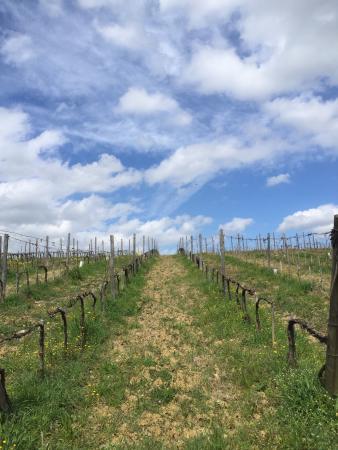 Borgo Tollena: La nostra azienda il nostro vino il nostro Resort