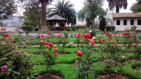 Salcedo, Ecuador: hermoso rosal