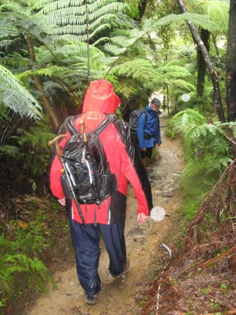 Riwaka Retreat: On the Trail