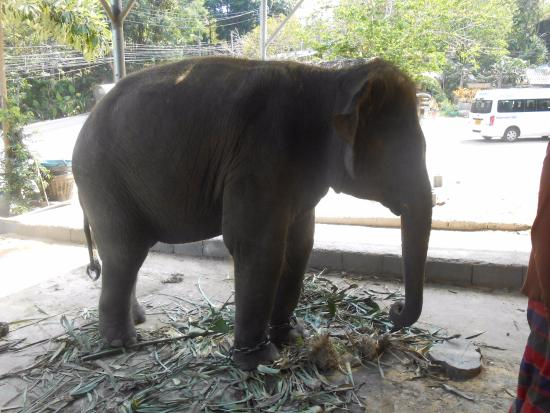 Kok Chang Safari Elephant Trekking: Safari Elephant Trekking
