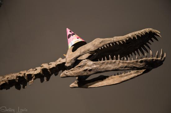 Courtenay & District Museum & Paleontology Centre: Watch out, he's on the hunt for some birthday cake!