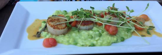 The Purple Palm Restaurant & Bar: scallop rizotto