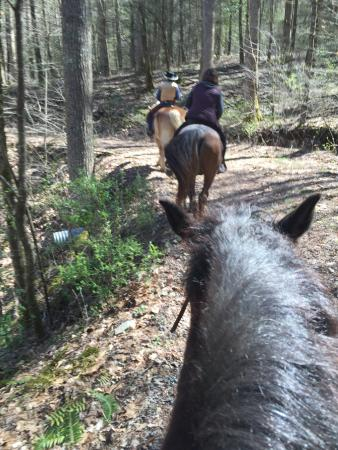 Pisgah Forest Riding Stables