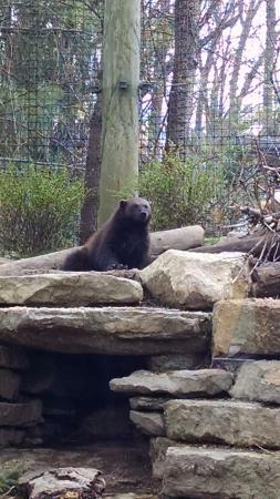 wolverine picture of columbus zoo and aquarium powell tripadvisor rh tripadvisor com