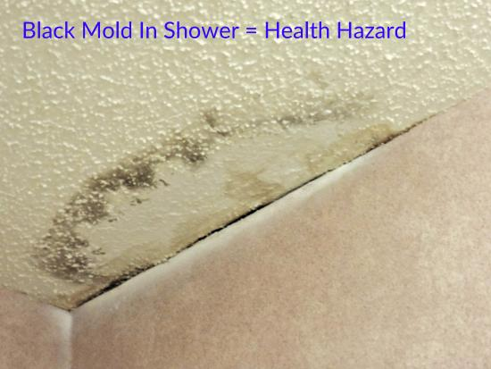 Priceville, AL: Black mold in shower corner.