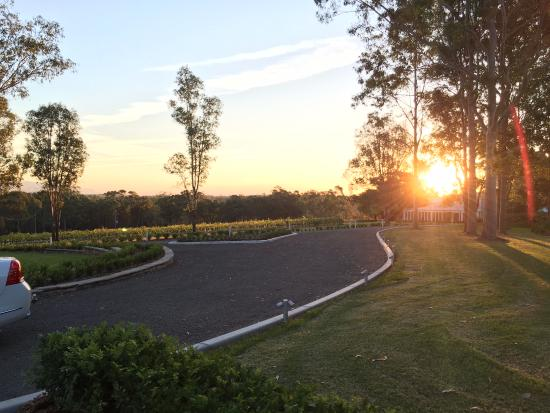 Spicers Vineyards Estate: The sunset over the vineyard and driveway at Spicers