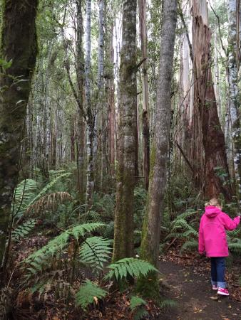 Maydena, Australia: A walk at the forest at the end of the pedalling