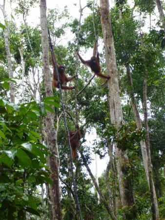 Orangutan Houseboat Tour