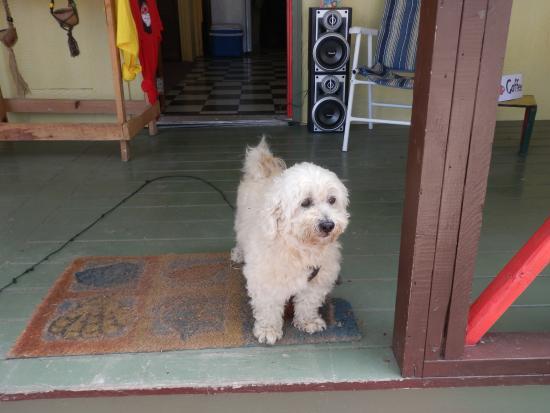 De Music Buzz : der süße Hund vom Musicbuzz
