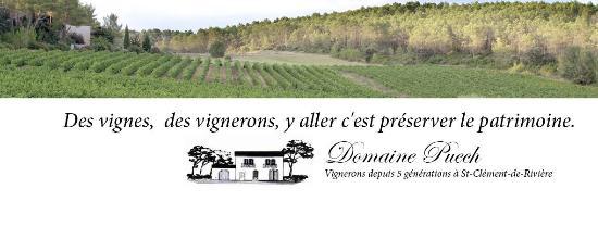 Saint-Clement-de-Riviere, Frankrig: Les vignes