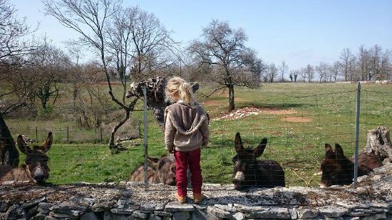 Zminj, Kroasia: The donkey garden.