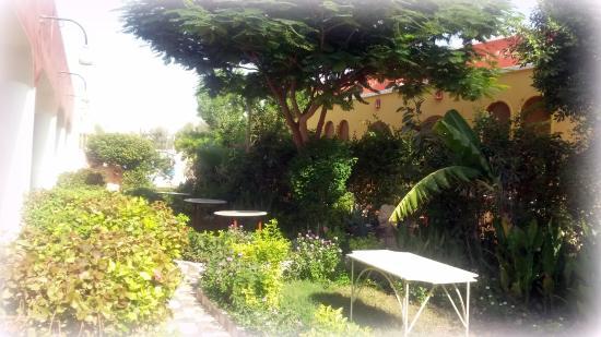 Desert Paradise Lodge: Garten unter anderem auch zum frühstücken