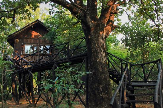 Pugdundee Safaris Tree House Hideaway: Tree House