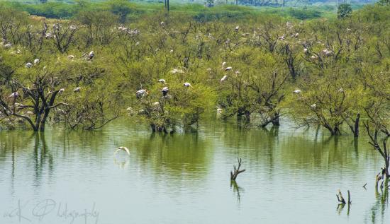 Koonthakulam, الهند: a view across the lake.