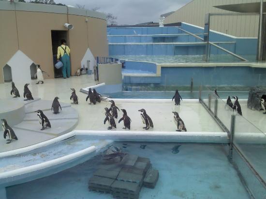 志摩マリンランド, 建物の外 入口付近でペンギンが見られます