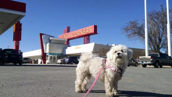 Clines Corners, NM: GiGi On The Scene at Cline's Corners!