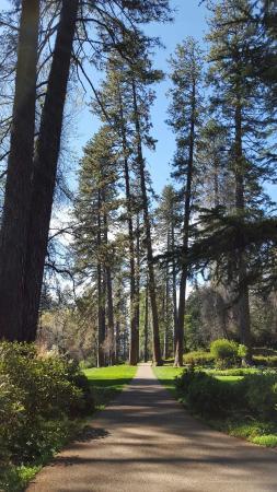 Grass Valley, Калифорния: Empire Mine State Historic Park