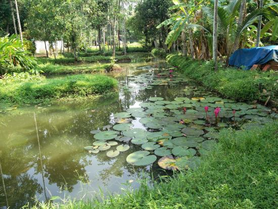 Palmgrove Lake Resort: The pond near the enttrance