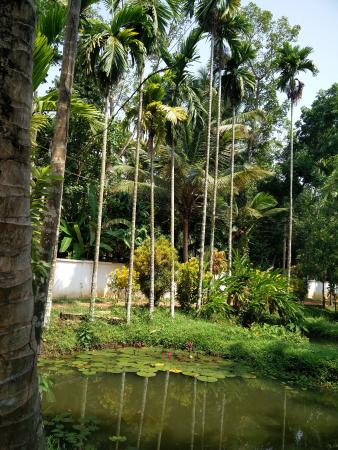 Palmgrove Lake Resort: The tiny pond near the entrance