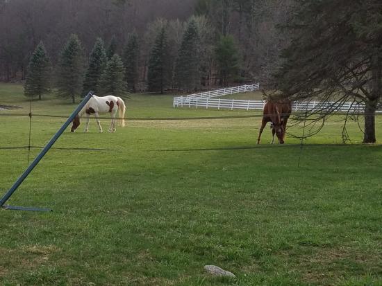 Greenville, Nova York: Horses