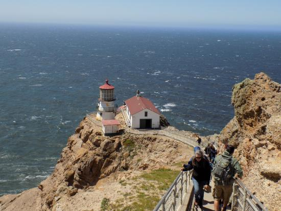 cypress tree tunnel picture of point reyes lighthouse point reyes rh tripadvisor com