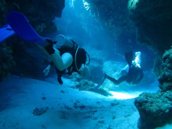 Mestizo Divers