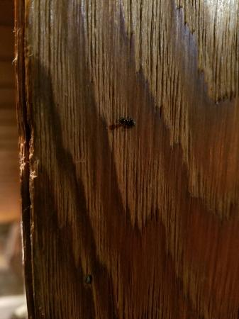 Forest Houses Resort: Ants are falling out of the ceiling by the thousands