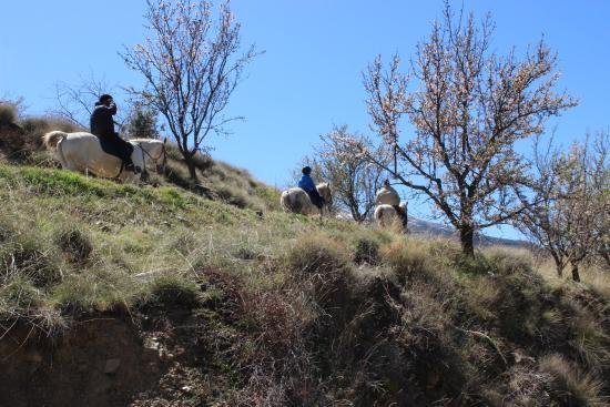 Güéjar Sierra