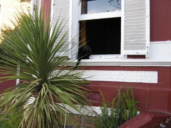 A Touch of Madness Restaurant : The cat is out the window