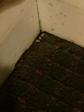 Ingersoll, كندا: Filthy! Bug eggs/nest in corner of bedroom, potato bugs crawling all over carpet and one was on 