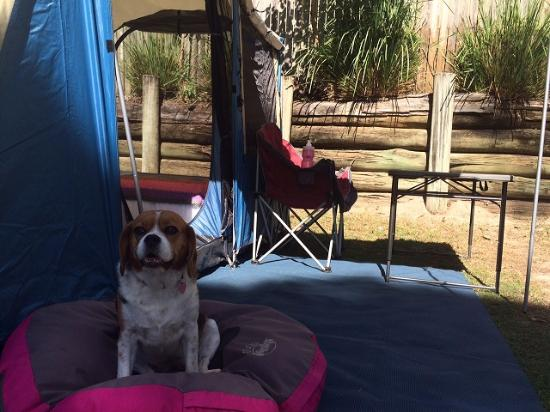 Iluka, Australien: CJ loved camping at Clarence Head Caravan Park