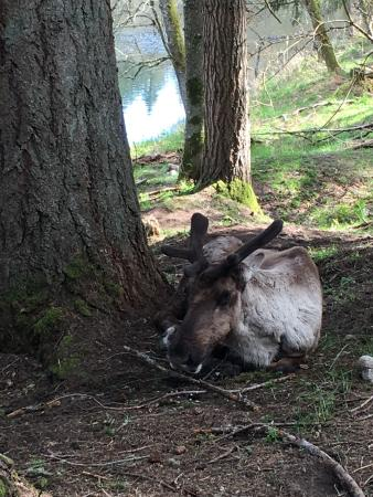 Eatonville, WA: Animals up close and personal!