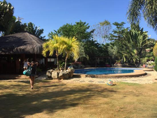 Alona Golden Palm Resort: Pool and garden in the morning