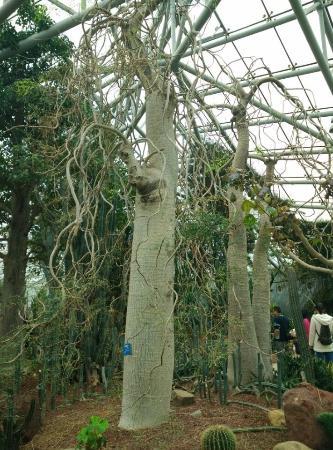 Zhongshan Botanical Garden: desert botanical garden
