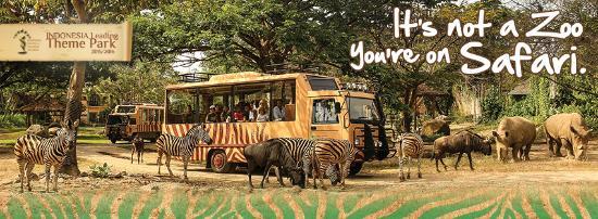 Bali Safari & Marine Park (Gianyar) - What to Know Before ...