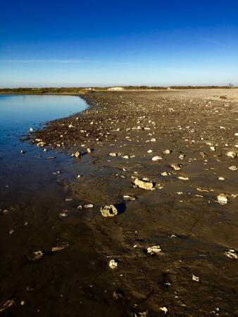 Laguna Madre: photo3.jpg