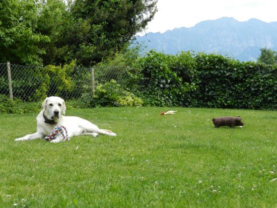 B&B Daisy Thun Switzerland: BnB Thun Schweiz