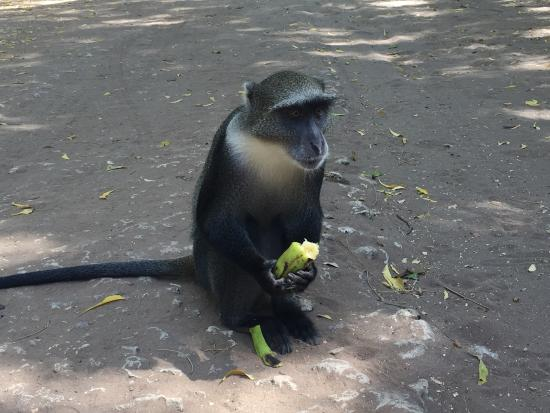 Gede, Kenia: photo0.jpg