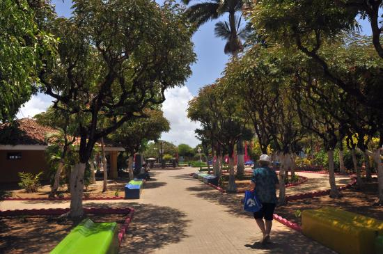 Rivas Department, Nicaragua: Preciosa arboleda