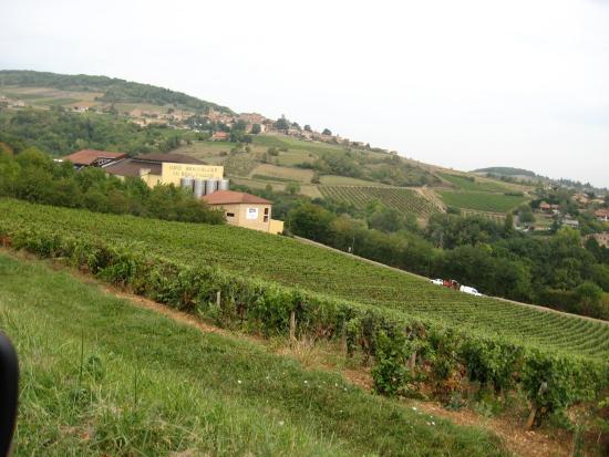 Vignoble des Pierres Dorées