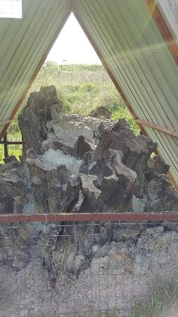 Foresta Fossile di Dunarobba: 20160403_161453_large.jpg