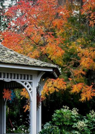 Coastal Georgia Botanical Gardens Savannah All You Need To Know Before You Go With Photos